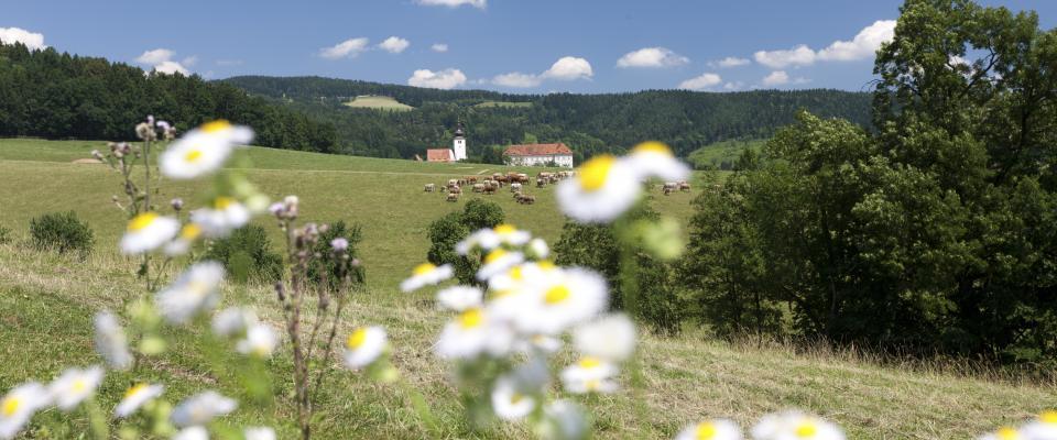 Weitwandern & Pilgern am Jakobsweg Weststeiermark, Lipizzaner Gestüt © Steiermark Tourismus/Harry Schiffer - www.steiermark.com/pilgern