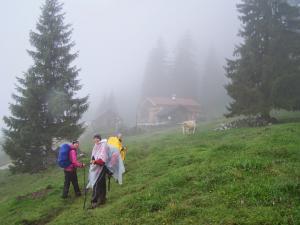 """""""Lichtblicke"""" im Nebel..."""