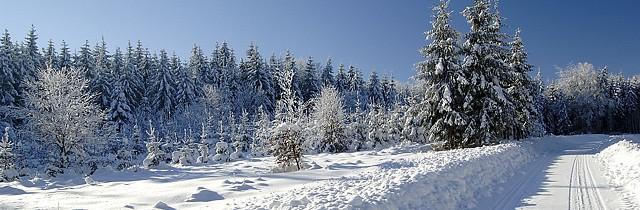 Winterwandern im Waldviertel (c) Waldviertel Tourismus GmbH.