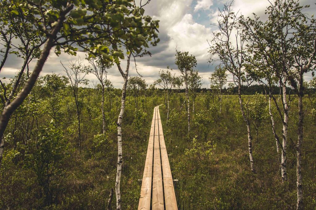 Wandern_Birken©pixabay
