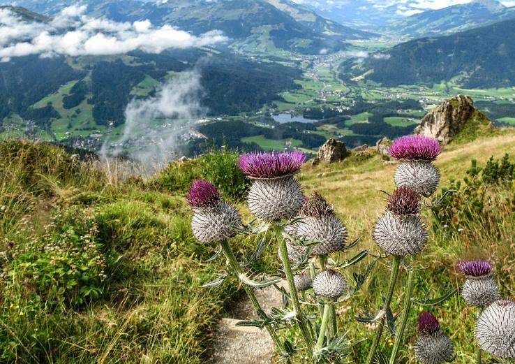 Highlight auf Etappe 5: Der Alpenblumengarten