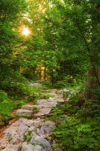 Die Wegbeschaffenheit variiert. Von Waldwegen über wurzeligen Boden bis hin zu Steigen. © Coen Weesjes