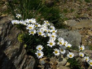Auch entlang der Etappe 4 gibt es noch immer bunte Blumen zu entdecken