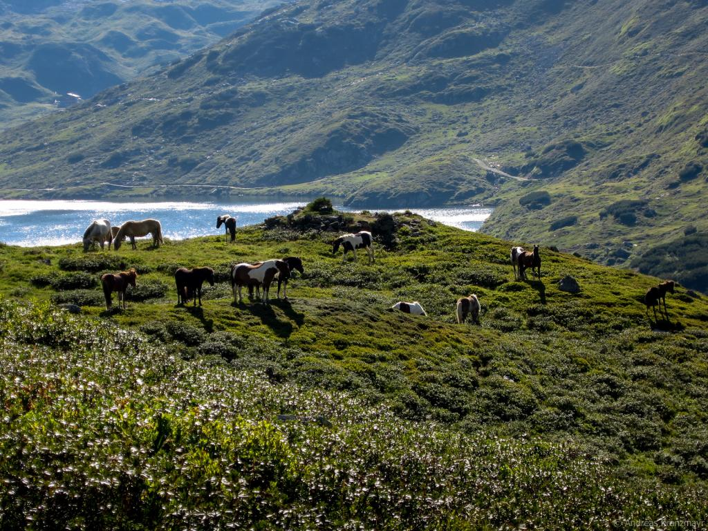 Die Etappe 2 startet bei den Giglachseen - Hier grasen auch Pferde