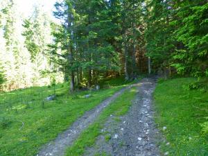 Die Etappe 1 startet direkt in Filzmoos mit einem schönen Waldweg