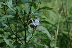 Etappe7-Wanderung-Soleweg-Schmetterling-Foto-Katharina-Scherz (2)