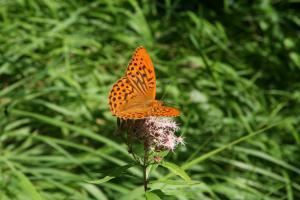 Etappe7-Wanderung-Soleweg-Schmetterling-Foto-Katharina-Scherz