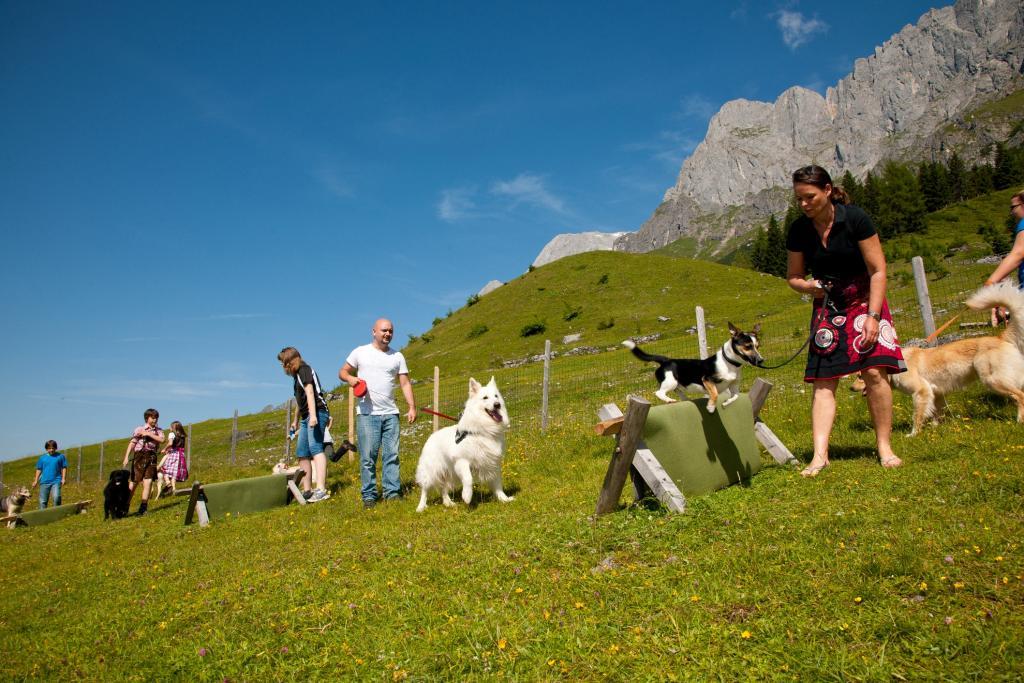 Hundeparcours beim Arthurhaus, © Anita Bott