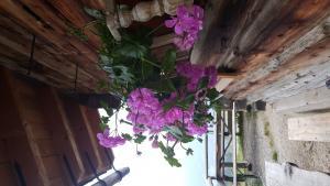 Blumen auf Almh++tte