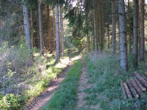Der Weg entlang der Etappe 9 führt durch einen schattigen Wald