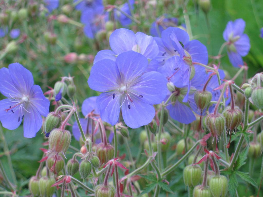 Wunderschöne Flora entlang des Weitwanderwegs...