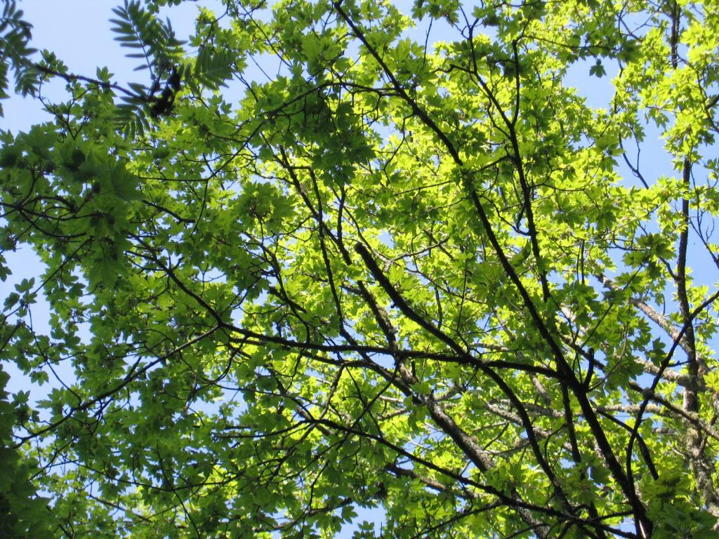 Die Baumarten entlang des gesamten Weitwanderweges wechseln von Laubbäumen hin zu Nadelbäumen wie Zirben, Fichten usw.