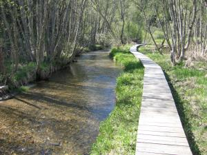 Der Weg führt neben einem Bach entlang