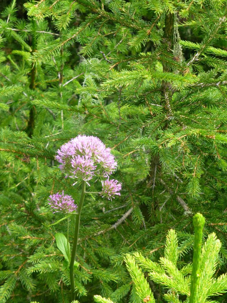 Auch unterschiedliche Blumen und Pflanzen stehen am Wegesrand