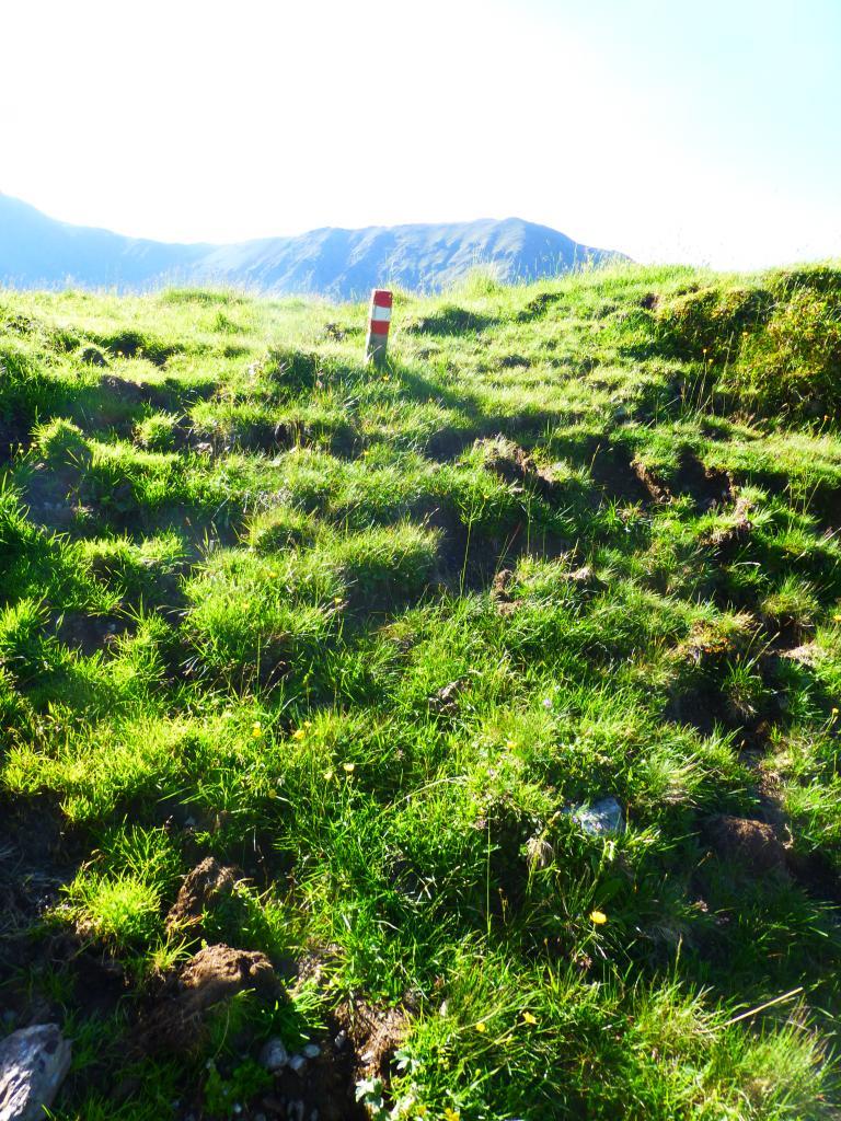 Bei der Morgensonne sind auch kleine Markierpfosten gut zu sehen