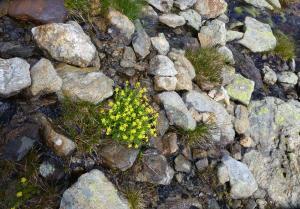 Bemerkenswert wie sich kleine Blumen hier einen Lebensraum schaffen