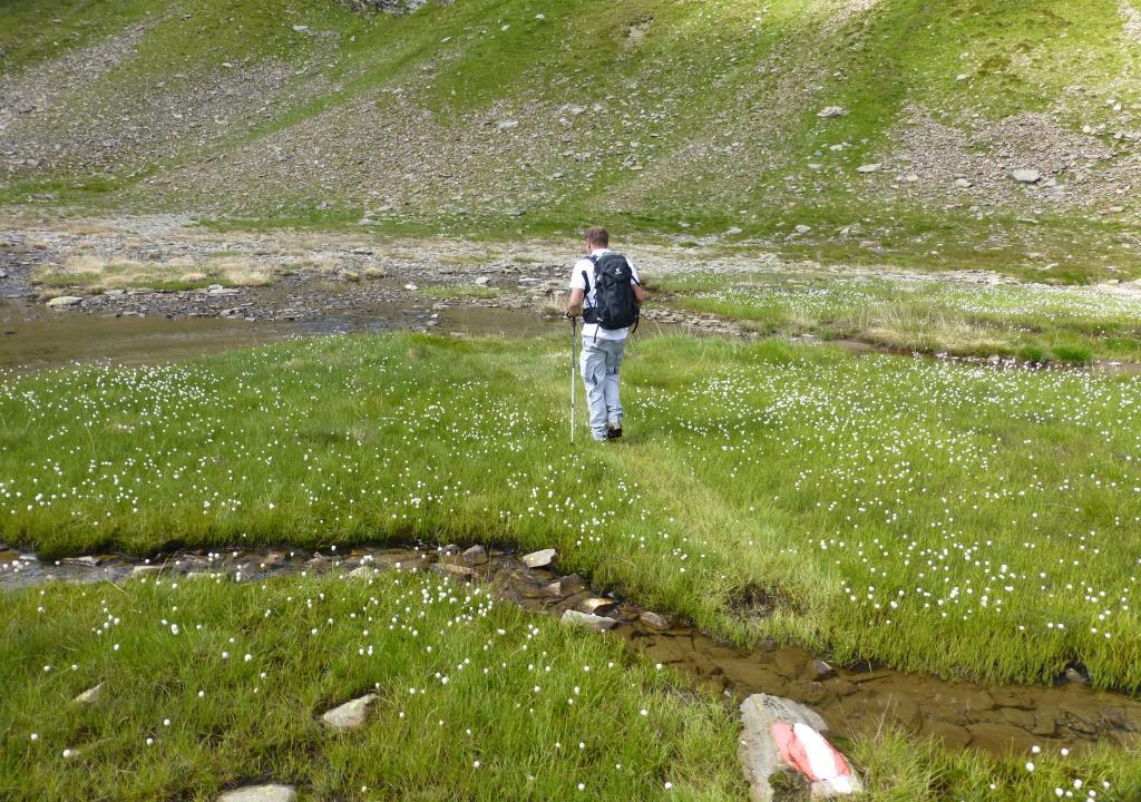 Man wandert über das Wasser durch Wollgrasfelder...