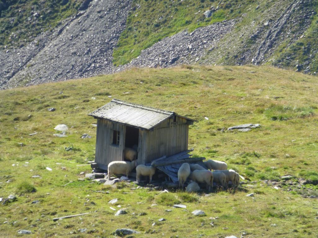 Auch hier trifft man auf der Alm wieder auf Schafe