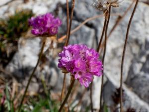 Blumen entlang des Weges, © Andreas Kranzmayr