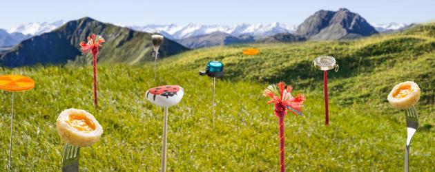 Kitzbüheler Alpen Blumenwiese, © Kitzbüheler Alpen