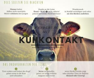 Wandern mit Kuhkontakt Kuh