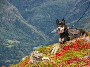 dog-1557956©pixabay