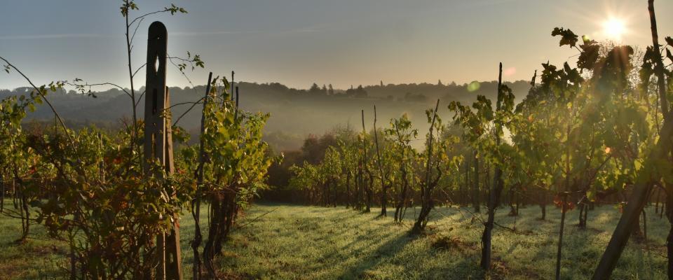wine-2853916 c pixabay