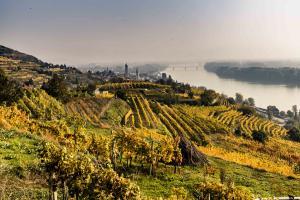 Herbstlandschaft Krems © Donau Niederösterreich / Robert Herbst