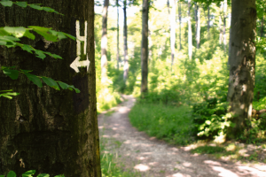 Wandereindrücke © wandermagazin